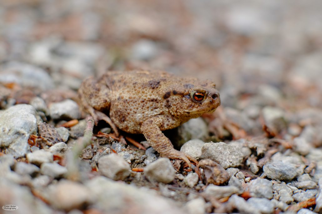 toad_2016-06_-1